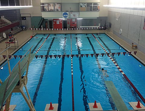 Steve in a speedo gross my new place to workout - Anna university swimming pool reviews ...
